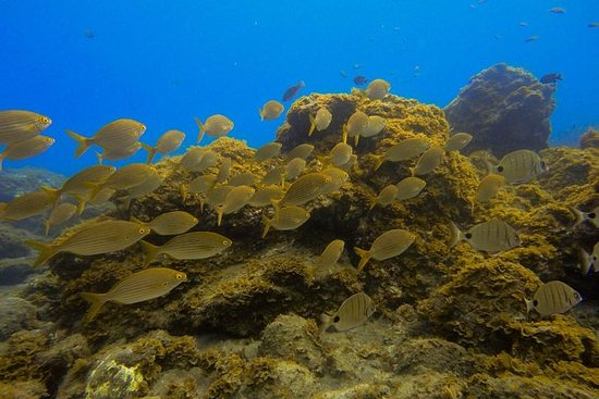 SNORKELING EXCURSION IN SOUTH TENERIFE - 3,5 HOURS