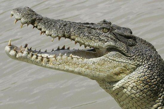 Entrada al parque de cocodrilos con...