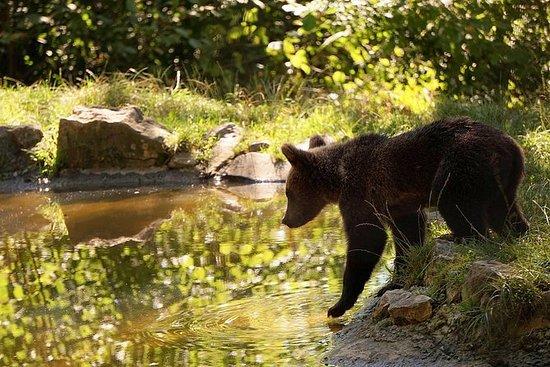 Meet the Bears & Visit Dracula Castle...