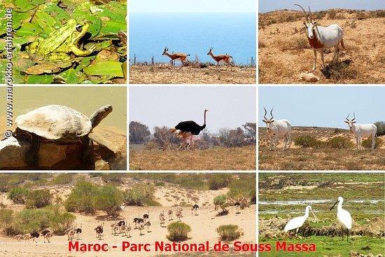 Full-Day Wildlife Tour door Souss ...
