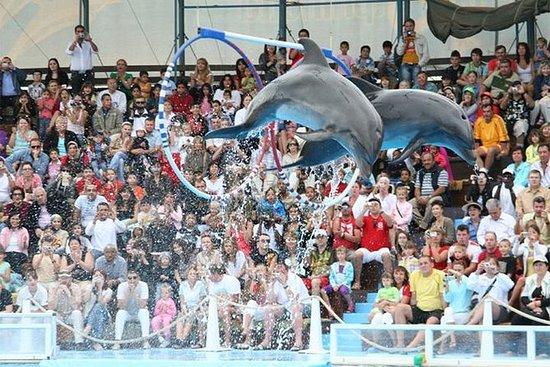 Show de delfines en Sharm ElSheikh