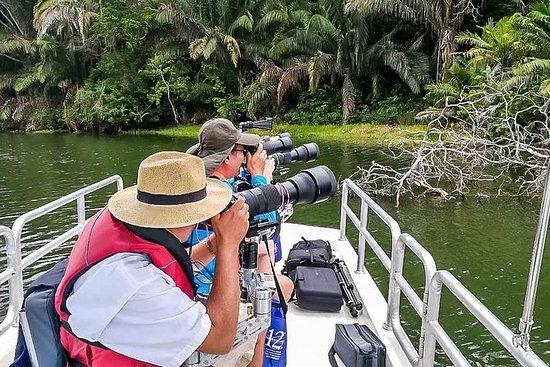 Regenwald Fotografie Safari