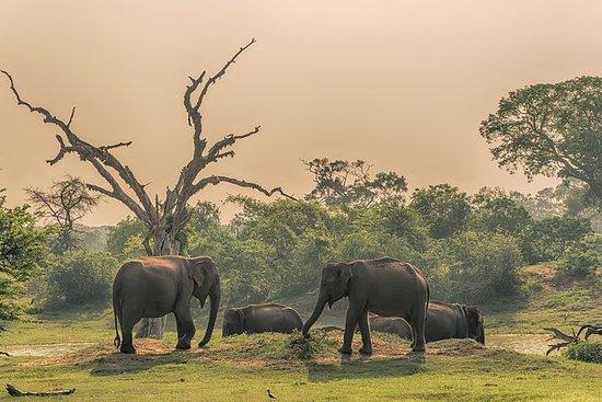 Udawalawe National Park Safari all...