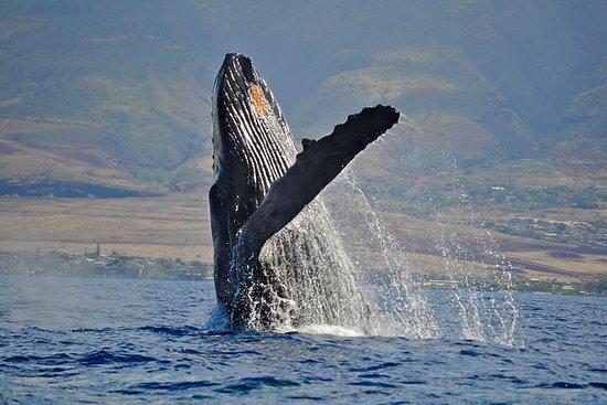Por la tarde avistamiento de ballenas