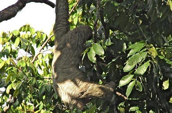 Sloths, frøer, aber !! med vandfald...