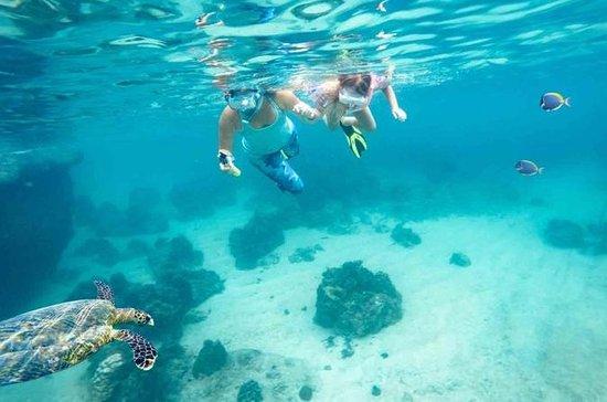 Dimaniyat Island från Muscat