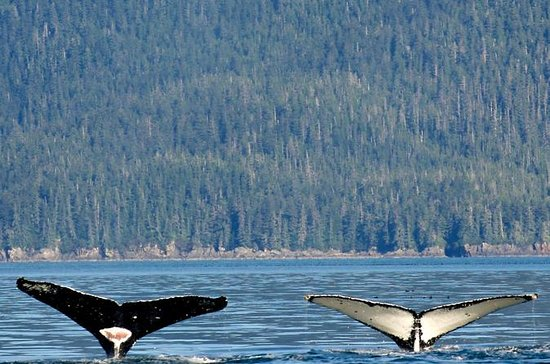 Whale-watching and Wildlife Adventure...
