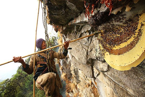 Mountain Sun Valley Treks and Expedition: Honey Hunting in Thaku Bhir (hunting place), Nepal