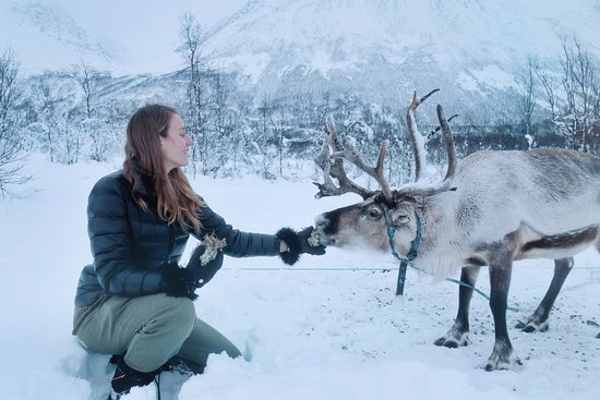 Tromso Lapland: Get up, close and personal with the reindeer. We offer reindeer feeding on all our tours.