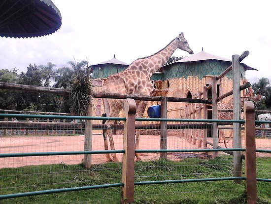 "Тематический парк ""Бето Карреро Уорлд"": Girafas"