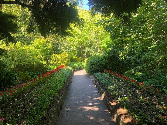 Caringbah, Australië: Flowers
