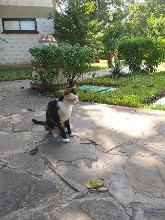 Baobab's Resident Cat 😎