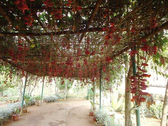Gavi, Индия: floral park
