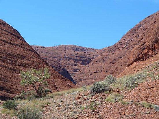 4-Day Ayers Rock to Ayers Rock Camping Tour including Kata Tjuta Uluru and Kings Canyon: Monts Olga
