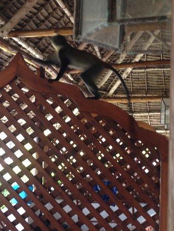 Dongwe Club: Scimmietta sul terrazzino della camera