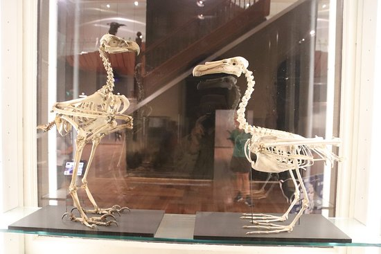 Tasmanian Museum and Art Gallery: Animal skeletons