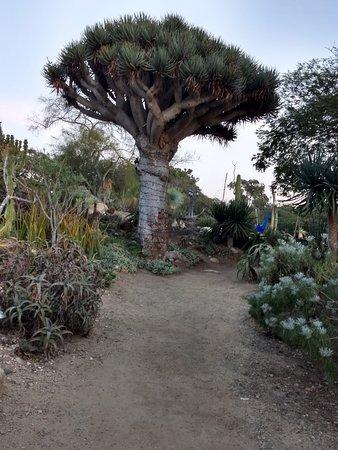 San Diego Botanic Garden Encinitas 2019 All You Need To Know