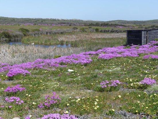 West Coast National Park: bunte Blumenwiese mit Ausguck