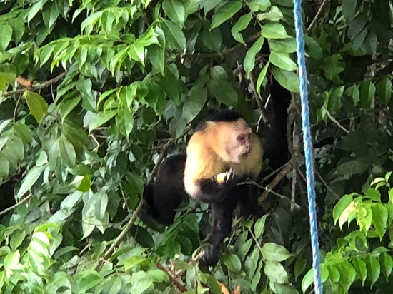 We had a wonderful guide Alon Levy, who took us to see the monkeys and the Panama Canal.