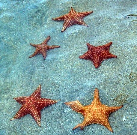 Aquí es donde me gustaría estas ahora, tumbada en una playa paradisiaca y contemplando las estrellas. En Playa Blanca por ejemplo, en #Panamá, donde hice esta foto. ¡Qué ganas de sol!