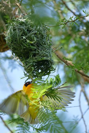 Ảnh về Kibale National Park
