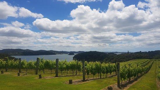 Omata Estate: Vineyard