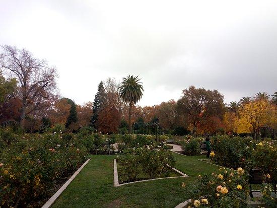 Rose Garden McKinley Park Sacramento