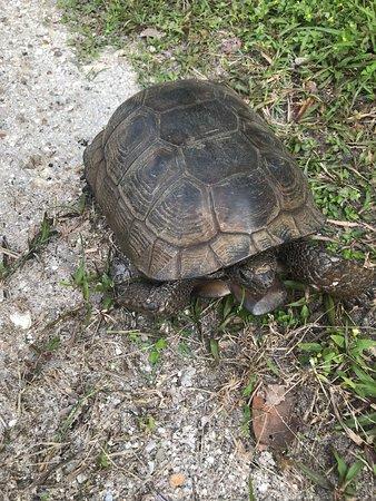 Остров Анна-Мария, Флорида: Awesome to see Wildlife