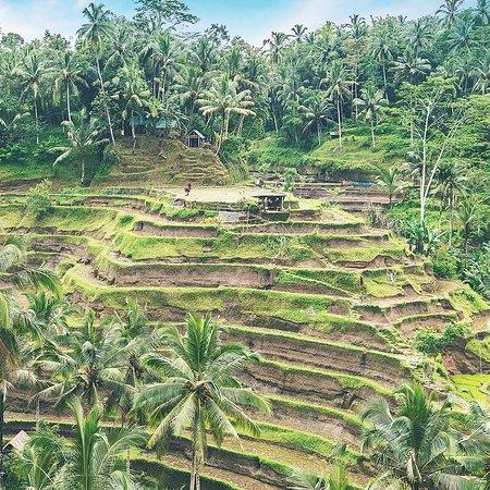 Trip by Locals Bali