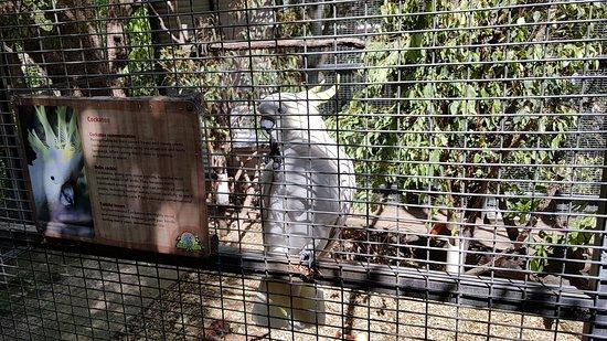 Lone Pine Koala Sanctuary.