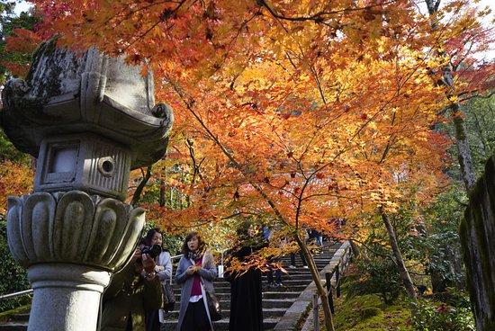 Япония: 永觀堂的秋色20181130