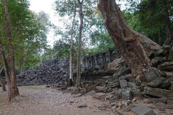 Beng Mealea: bigger trees growing through ruins than Ta Prohm