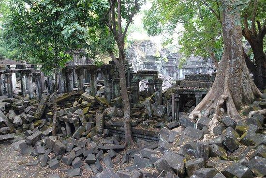 Beng Mealea: more trees/ruins