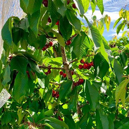 Lennane Orchards