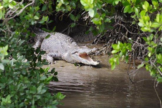 Whitsunday Crocodile Safari including...