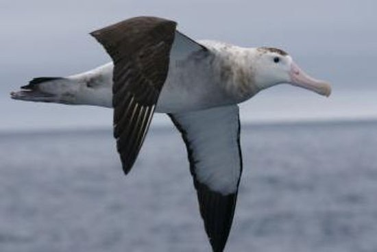 Kaikoura Albatross Encounter Tour fra...