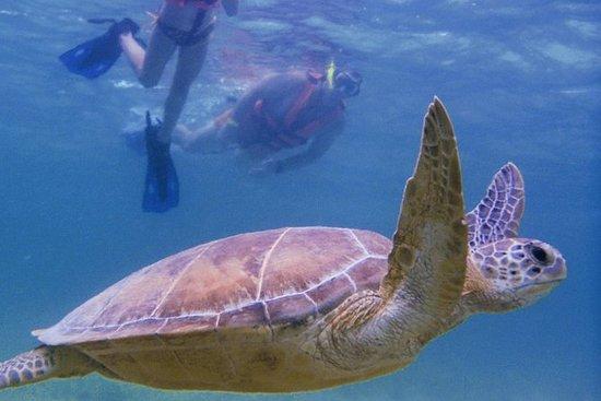 Sea Turtle Snorkling Ecofriendly Tour...