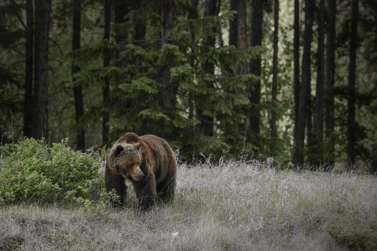 Discover Jasper and its Wildlife: Jasper Summer Wildlife Discovery Tour