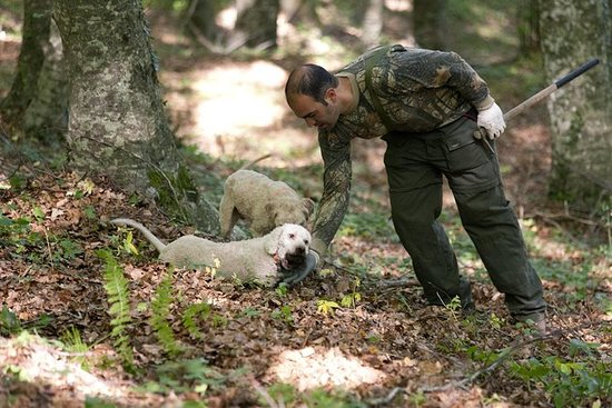 Private Tour: Truffle-Hunting...
