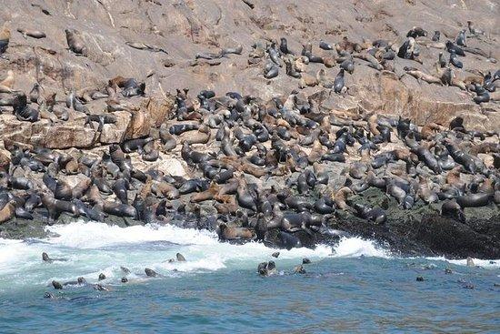 Excursion dans les îles Palomino et...