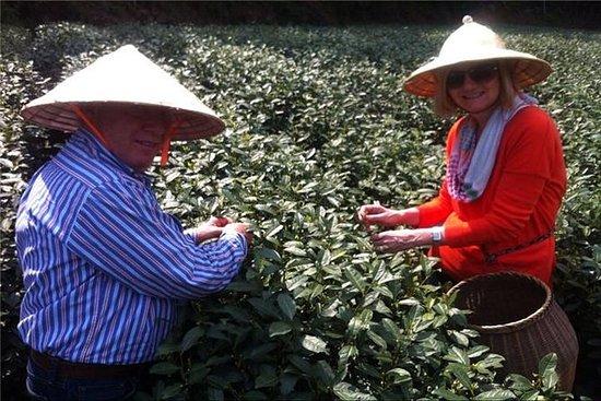 Tour privato della cultura del tè per