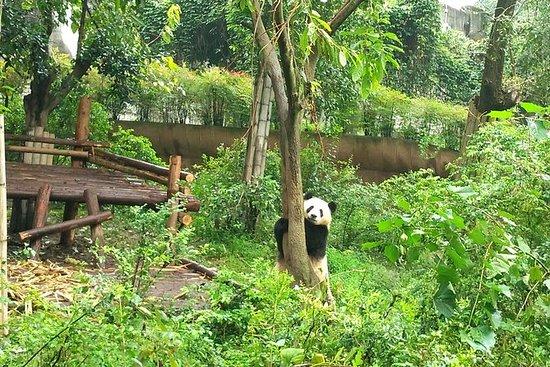 成都プライベートパンダ旅行、午後のプライベートツアー