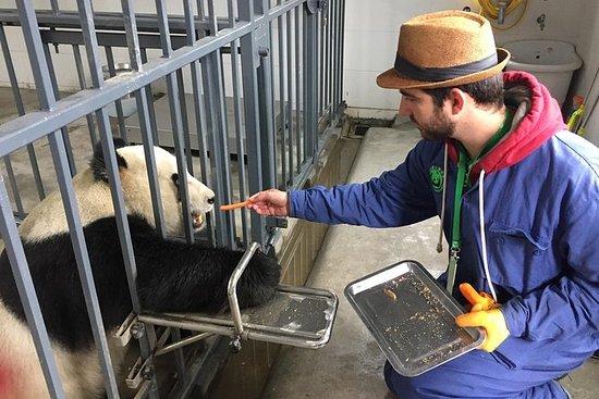 Wolong Panda Base Volunteering...