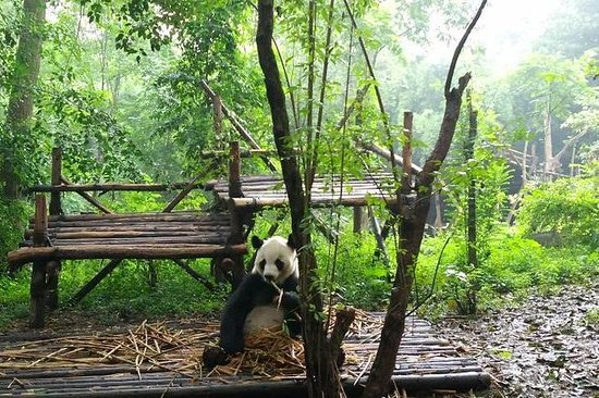 Private Day Tour: Chengdu Giant Panda...