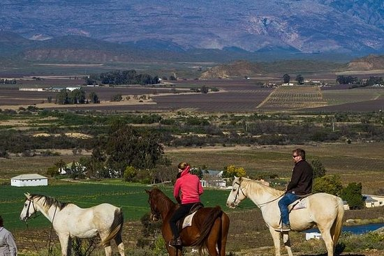 Tour Privado: Cape Winelands Tour da...