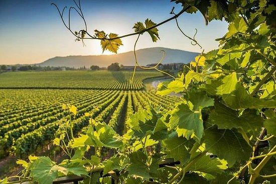 波光粼粼的Franciacorta私人葡萄酒之旅,午餐和葡萄酒厂参观