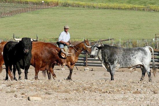 Spectacle des chevaux andalous et...
