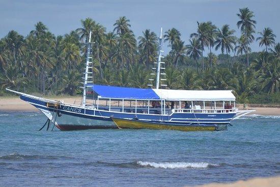 鲸鱼观赏日在普拉亚从阿布兰特斯或萨尔瓦多做Forte