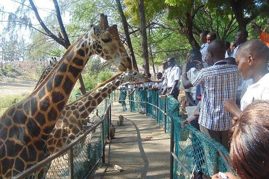 Haller Park Half-Day Tour from Mombasa