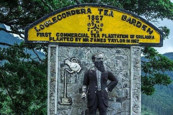 James Taylors Tea Story Tour fra Kandy